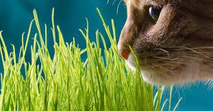 grow a feline friendly indoor garden