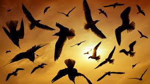 """Képtalálat a következőre: """"birds in the sky"""""""