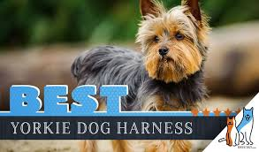 Voyager Harness Size Chart 6 Best Dog Harnesses For Yorkshire Terriers In 2019