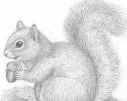 Small Picture Squirrel drawing Etsy