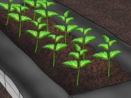 Kitchen Garden Trough 3 Ways To Build Raised Vegetable Garden Boxes Wikihow