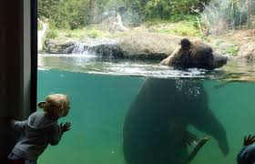 51 Best Things To Do With Kids In Seattle The 2020 Seattle