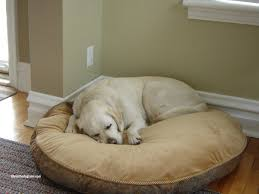 Kirkland Signature Dog Bed Best Between Costco Kirkland Dog Beds