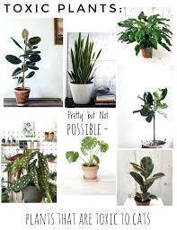 non toxic house plants 5 common poisonous house plants elegant a guide to the prettiest cat