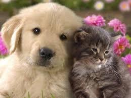 Experienced Pet Minder Dublin Gumtree Classifieds Ireland