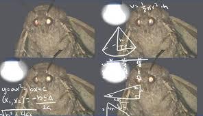 Nancy Miorelli On Twitter Guys I Made A Moth Lamp Meme