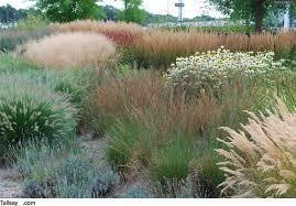 Wuivende Grassen In Je Tuin Tallsaycom