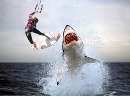 shark attack on humans. Plain Humans Sharks Attacking Humans Throughout Shark Attack On
