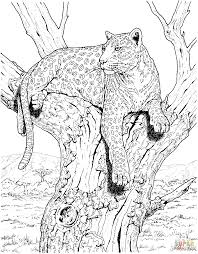 Leopard Sits On Tree Super Coloring Coloriage Pinterest