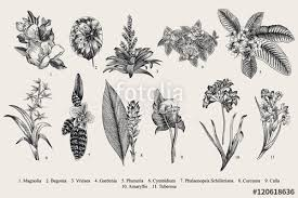 Botanical Vector At Getdrawingscom Free For Personal Use