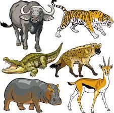 wild animals clipart. Delighful Animals Vector Set Of Wild Animals Design Graphic On Wild Animals Clipart