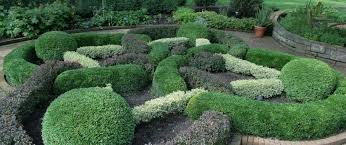 Choosing The Right Boxwood For Your Garden The Tree Center
