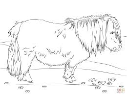 cute shetland pony