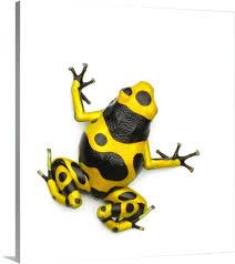 blebee poison dart frog frog wall art aj worth blebee poison dart frog wall art canvas