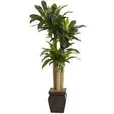 4 1/2' ARTIFICIAL FAKE TROPICAL CORNSTALK DRACAENA PLANT TREE - REAL TOUCH