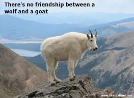 Goat Quotes Gorgeous There's No Friendship Between A Wolf And A StatusMind