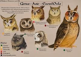 Asio Species Chart By Busbyart On Deviantart Owl Species