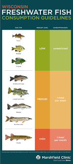 High Mercury Fish Chart Mercury And Fish In Wisconsin