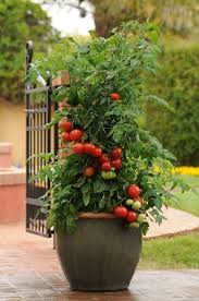 160 Best Planters Images On Pinterest  Planters Tomato Planter Container Garden Plans Tomatoes
