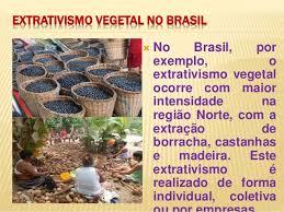 Resultado de imagem para Imagens extrativismo vegetal