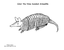 Small Picture Armadillo Coloring Page