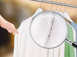 bed bugs treatment do it yourself bed bug control