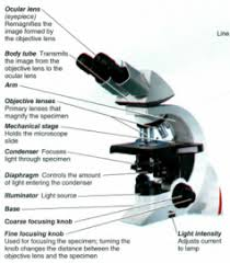 Parts Of The Microscope Microbio Practicum Microscope Parts Biological Sciences