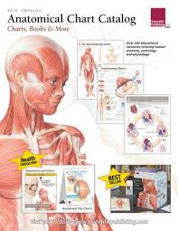Anatomical Chart Catalogue 2018 Scientific Publishing By