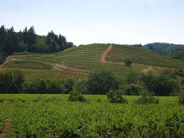Vineyards in the California wine region of the Dry Creek Valley in Sonoma