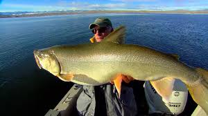 Lake Trout Length To Weight Conversion Chart - In-Fisherman