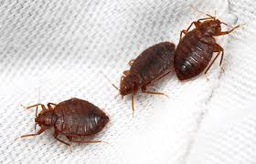 Pest Identification Common Insects And Pests Found In Md