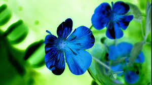 beautiful wallpapers for desktop background hd. Delighful Background Beautiful Blue Flowers HD Desktop Wallpaper Inside Wallpapers For Background Hd