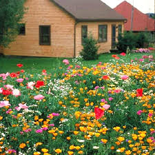 shade tolerant wildflowers mix seed 200 seeds of each pack colorful flower garden plants garden seeds