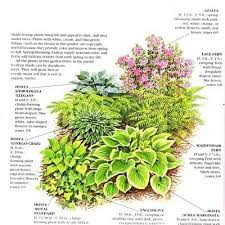 Small Picture Best 20 Garden shrubs ideas on Pinterest Potted plants Shrubs