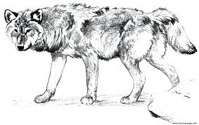 Wolf Coloring Pages Printable Grey Wolf Coloring Sheets Printable