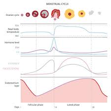 Menstrual Cycle Moon Chart Wisdom Of The Menstrual Cycle Christiane Northrup M D