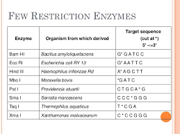 Restriction Enzyme Restriction Enzymes D Sirohi