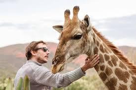 giraffe experience oudtsn chandelier game lodge