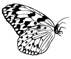 無料イラスト シルエット蝶オオゴマダラ横向き
