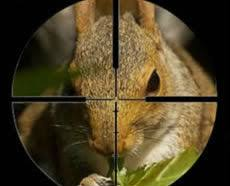 Image result for squirrel hunting