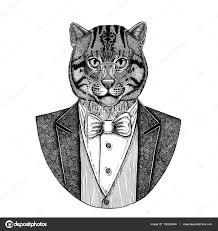 Kočka Divoká Kočka Rybářská Rukou Nakreslené Ilustrace Pro Tetování