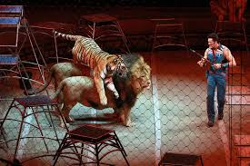 ringling is dead but other abusive circuses live new york is right to push to ban other animal performances