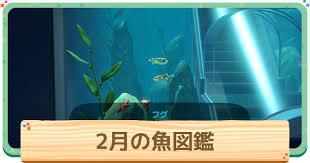 あつ 森 二 月 魚