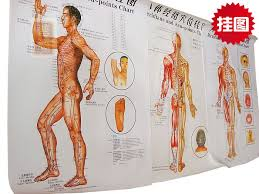 The Back Of The Body Meridians Acupoints Moxibustion Acupuncture Points Chart Wall Map Of Acupuncture Scrapping Chinese English