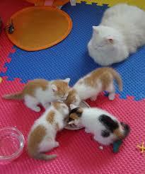Kitten Growth Chart Kitten Growth Chart Spot The Kitty