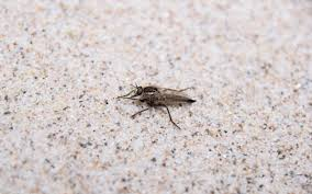 Fungus Gnats Attracted To Light Got Gnats How To Get Rid Of Fungus Gnats Epm