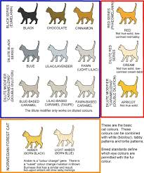 Dog Color Genetics Chart Colour And Coat Genetics In Cats Cats From Your Wildest Dreams