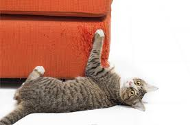 8 Ways To Keep Your Cat from Shredding Your Furniture