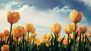 40 Beautiful Flower Wallpapers for your ...