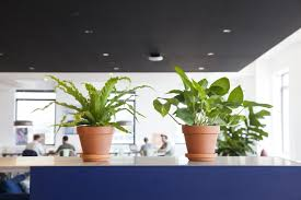 office greenery. How To Choose The Best Office Plant For Your Work Space | Architectural Digest Greenery